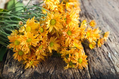 Vibrant and warm tone local flowers on grunge wooden background, soft focus Stock Photography
