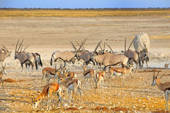 A Vibrant waterhole in Etosha National Park Stock Photo