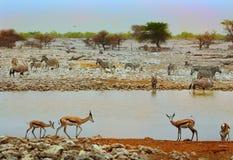 A vibrant waterhole in Etosha national park Stock Photo