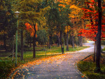 Vibrant winding road through the woods Stock Photo