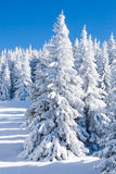 Vibrant winter vacation background with pine trees covered by heavy snow Royalty Free Stock Photo