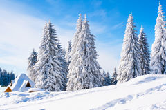 Vibrant winter vacation background with pine trees covered by heavy snow Stock Image