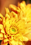 Vibrant Yellow Flower Stock Photo