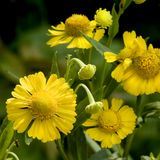 Vibrant yellow flowers Royalty Free Stock Photography