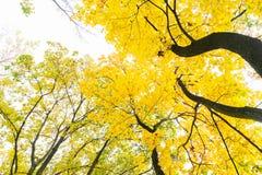 Vibrant fall foliage Royalty Free Stock Photo