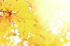 Vibrant fall foliage Stock Photography