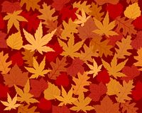Vibrantly colored autumn leaves wallpaper. Seamless vector wallpaper of maple, oak and beach leaves in autumn colors Royalty Free Stock Photography