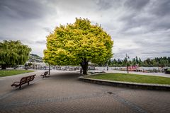 Rain clouds gather over Queenstown. A vibrantly colored tree sits in the center of town square and is a welcomed sight for visitors royalty free stock photo