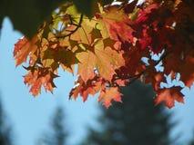Vibraphone d'automne Image libre de droits