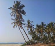 Vibraphone tropical par la plage photographie stock libre de droits