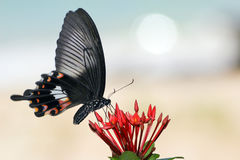 Free Vibrating Butterfly 2 Stock Photos - 2755513