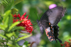 Vibrating butterfly  Royalty Free Stock Images