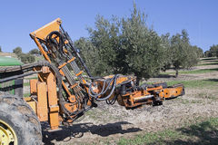 Vibrating machine in an olive tree. Jaen, Spain Stock Images