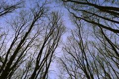 Vibrazioni di inverno Immagini Stock