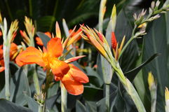 Vibrerande blom Fotografering för Bildbyråer