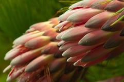 vibrerande blomma Arkivfoton