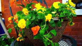 Vibrerande blommakorg Royaltyfri Foto