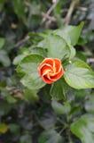 Vibrerande blommande spiral Arkivfoton