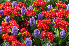 vibrerande blomsterrabattar Royaltyfria Foton