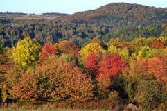 Vibrerande färga höstskogen Royaltyfria Bilder