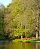 Vibrerande färgtulpan på skärm vid sjön på Keukenhof trädgårdar, Lisse, södra Holland Fotograferat i HDR h?gt dynamiskt omr?de royaltyfri fotografi