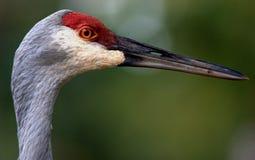 Vibrerande fågel Royaltyfria Bilder