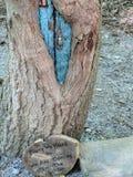Vibrerande felik dörr i trädfördjupning royaltyfri foto
