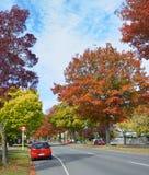 Vibrerande färger av hösten på den minnes- avenyn Christchurch Royaltyfria Foton