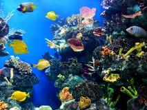 vibrerande färgrik livstid för akvarium Royaltyfri Bild
