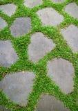 Vibrerande gröna gräs som glöder mellan trädgården som kliver stenar Royaltyfria Bilder