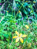 Vibrerande gul blomma i en äng arkivbild