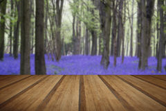 Vibrerande landskap för skog för blåklockamattvår med träplan Arkivfoto