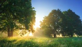 Vibrerande landskap för sommar av morgonnaturen med ljust solljus arkivbilder