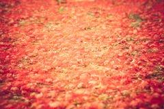Vibrerande liten röd blommaräkningsjordning Arkivfoto