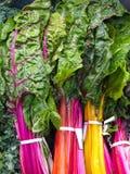 Vibrerande marknadsskärm av den nya organiska regnbågecharden arkivfoton