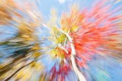 Vibrerande naturabstrakt begrepp Björkträd i nedgången, Maine Arkivbild