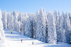 Vibrerande panorama av lutningen på skidar semesterorten Kopaonik, Serbien, folket som skidar, snöträd, blå himmel Arkivfoto
