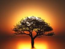 vibrerande röd solnedgång för färgliggande Royaltyfri Bild