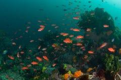 Vibrerande revfisk och rev i den Komodo nationalparken royaltyfria foton
