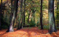 vibrerande skogsmark för höstplats Fotografering för Bildbyråer
