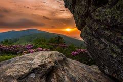 Vibrerande solnedgång bak Jane Bald Rhododendron arkivbilder