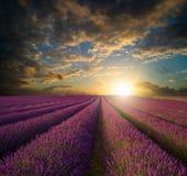 Vibrerande sommarsolnedgång över lavendelfältlandskap Royaltyfri Fotografi