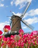 Vibrerande tulpanfält med den holländska väderkvarnen arkivbilder