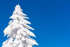 Vibrerande vintersemesterbakgrund med sörjer trädet som täckas av tung snö och blå himmel Arkivbilder