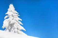 Vibrerande vintersemesterbakgrund med sörjer trädet som täckas av tung snö och blå himmel Arkivfoton