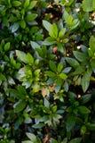Vibrierende Blätter in Bush stockbild