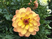 Vibrierende Blume Lizenzfreie Stockfotos