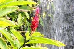 Vibrierende Blume in einem tropischen Garten lizenzfreie stockbilder