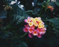 Vibrierende Blumen stockbilder