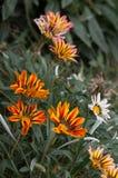 Vibrierende Blumen in einem Park Stockfoto